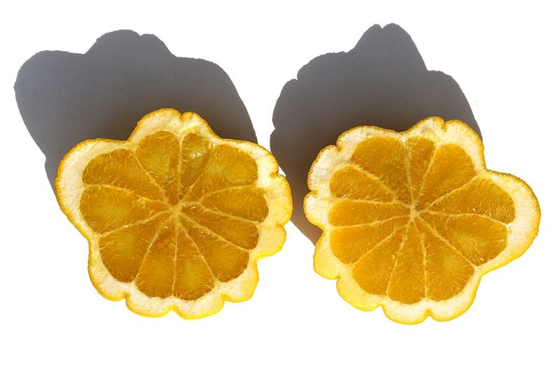 Chimere citrus lumia  Pomum Adami coupe
