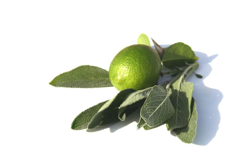 Lime sauge