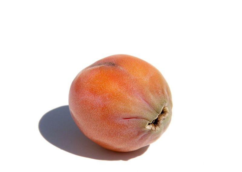 Pomme du Rio Grande pitaya de montagne