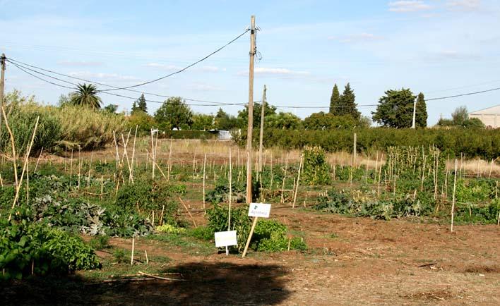 Myfarm béja 2012 10