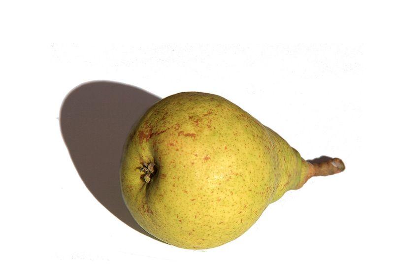 Pear Louise Bonne d'Avranches