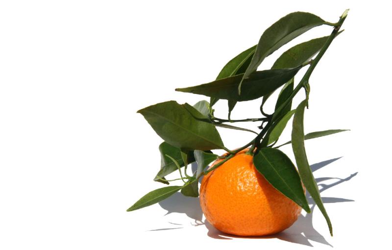 Mandarino tardivo di Ciaculli.