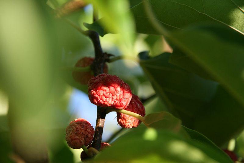 Mandarin Melon Berry