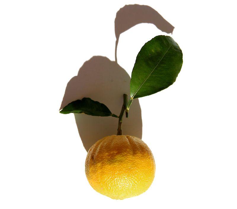 Bergamote orange