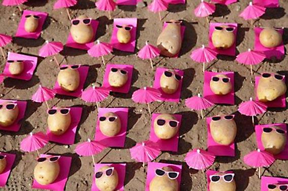 Pommes de terre en vacances