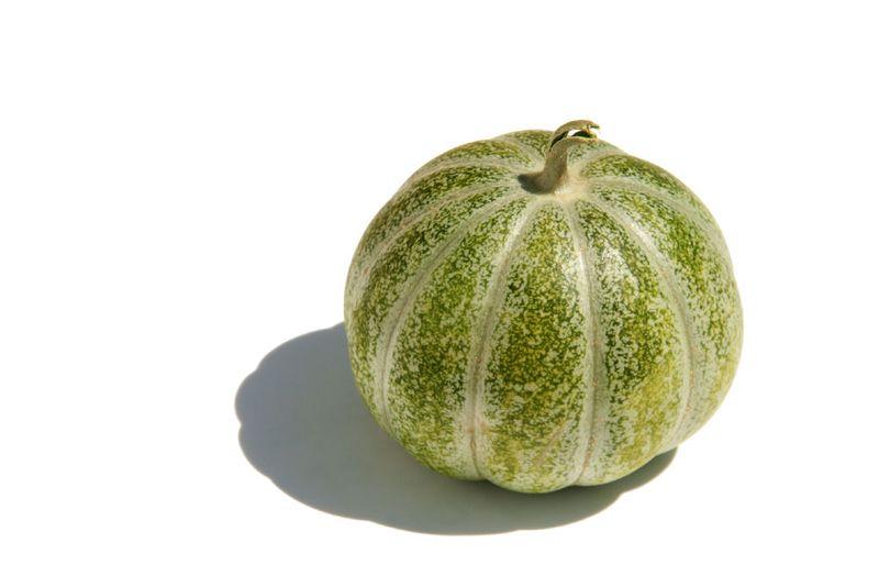 Melon vert grimpant