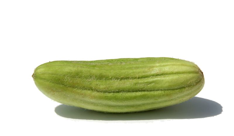 Cucumber Cetriolo Melone Carosello Medio Lungo Pugliese