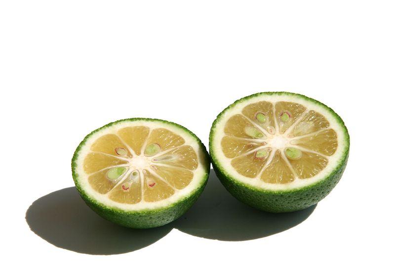 Kabosu Citrus sphaerocarpa