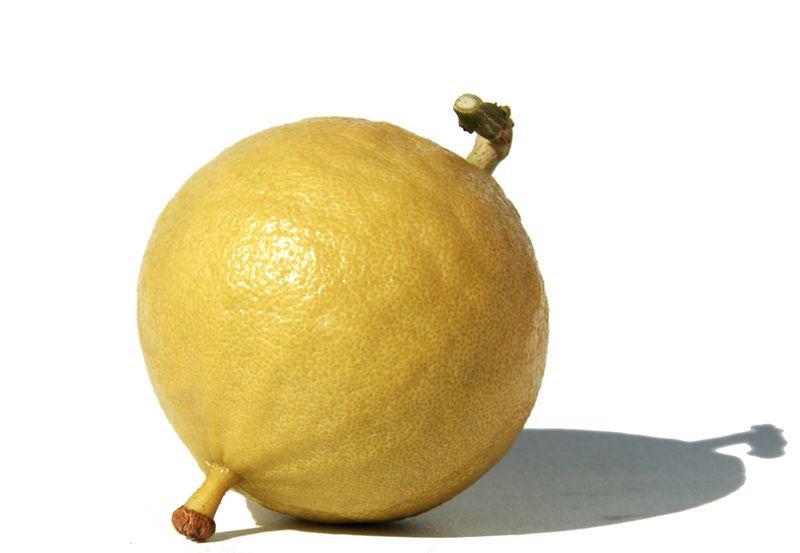 Bergamot bergamota