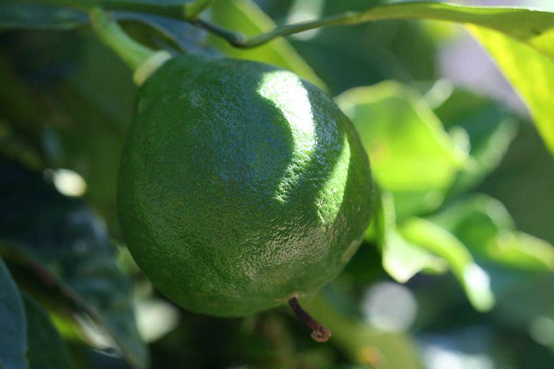 Lumia pomme d'adam