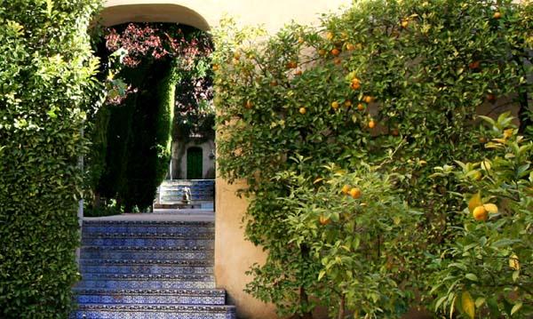 Seville nez de marche bleus s