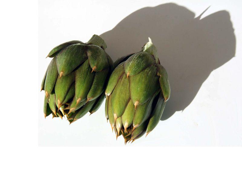 épineux artichauts