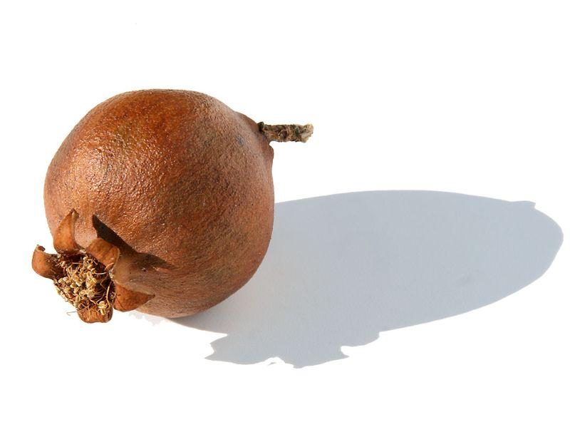 Grenade seche