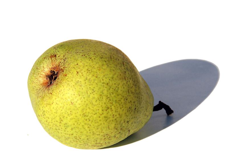 Comtesse Paris pear