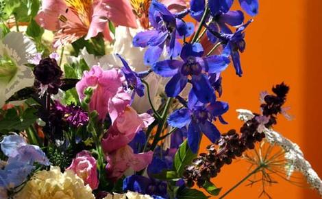 Basilic_violet