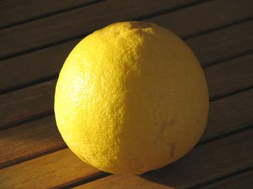 Californian_lemon_ponderosa_citro_2