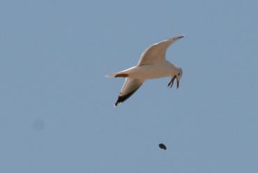 Bird_poop_crotte_doiseau