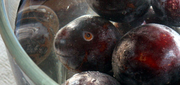 Plum_head_tte_de_prune