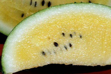 Watermelon_pasteque_melancia_sungol