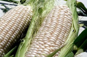 Corn_frosty_mas_doux