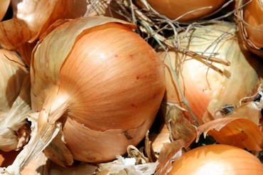 Onion_oignon_cebola_2