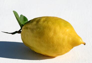 Citrus_medica_cedrat