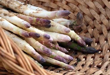 Asparagus_asperge_aspargo_espargo_a