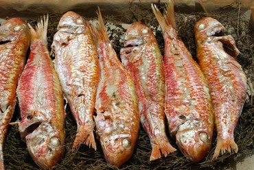 Red_snapper_rouget_salmonete