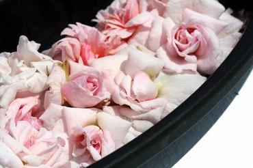 Bed_of_roses_lit_de_roses
