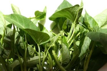 Water_spinach_liseron_deau