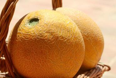 Melon_gallia_meloa_glia