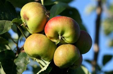 Apple_pommes_ma