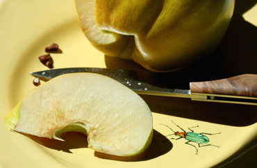 Quince_coing_manger_cru_2