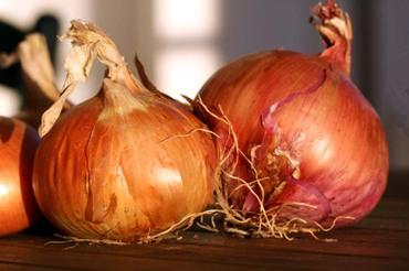 Onion_oignon_cebola