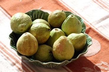 Guava_goyaves_goiaba_branca