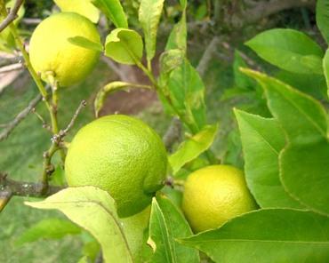 Citron8