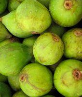 Figs_1