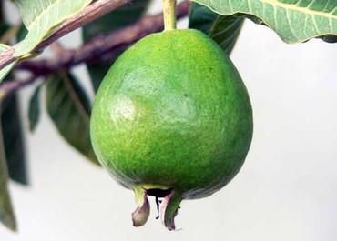 Guava_goyave