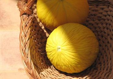 Melao_amarelo_dourado_vilmorin_melon_jau