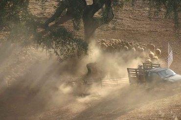 Troupeau_de_moutons