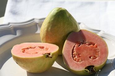 Guava_goyave_psidium