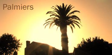 Palmier_palm