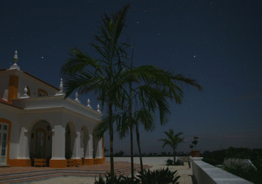 Stars_and_palmtrees_toies_et_palmie