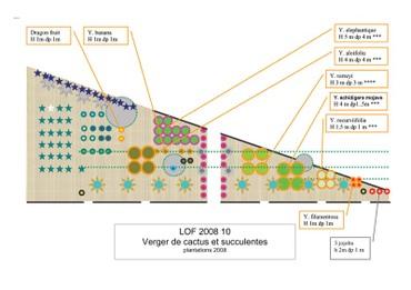 Plan_des_yuccas_20082009_copie