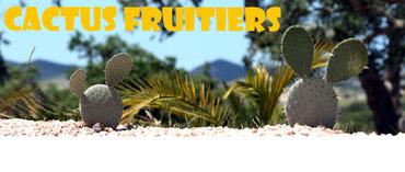 Succulentes_comestibles
