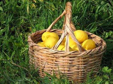 Basket_full_of_lemons_panier_de_citron