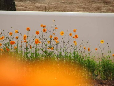 Jardin_orange