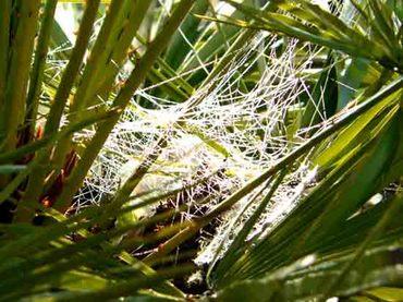 Spiders_web_toile_daraigne