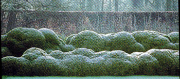 Un jardin habité: Haie - Hedge