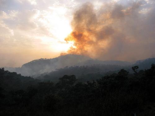 Forest_fire_fogo_feu_fort
